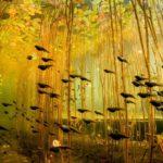 Renacuajos nadan a través de las algas en el lago Cedar en Canadá.